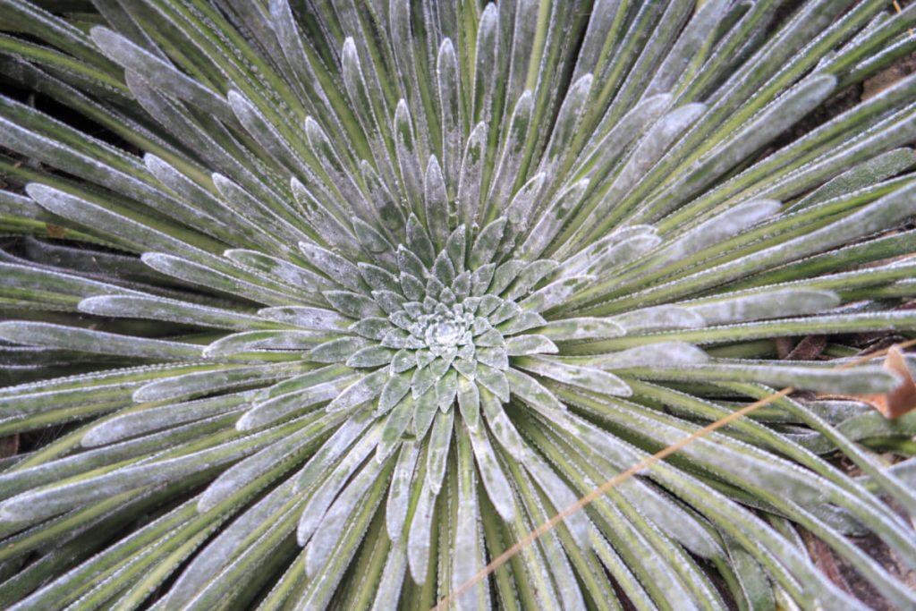 131 - Flora y fauna (Xisco Villalonga)